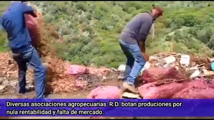 """AGROPECUARIOS CONTINÚAN BOTANDO PRODUCCIÓN POR NULA RENTABILIDAD Y FALTA MERCADO; MILTON NÚÑEZ DICE """"MANIFESTACIONES SON POLÍTICAS""""."""